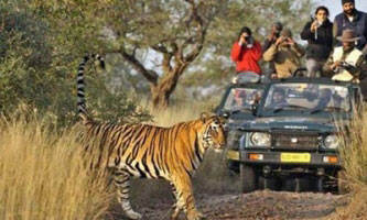 Wildlife Tour Packages in Jhansi